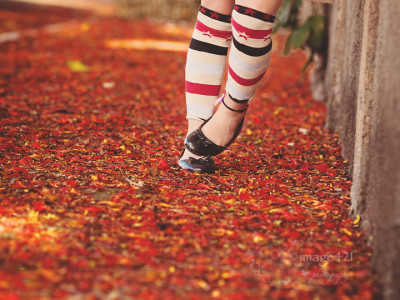 Carpet of red flowers: children's photography in Sydney